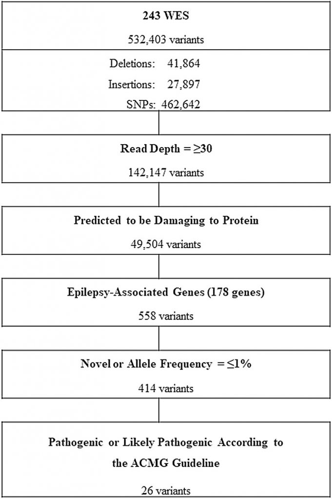 Genetic characteristics of non-familial epilepsy.